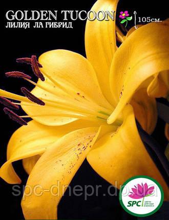 Лилия ла гибрид Golden Tucoon, фото 2