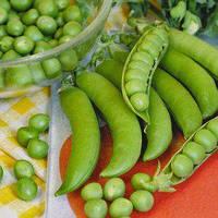 Семена гороха овощного Бостон 1 кг , Польша