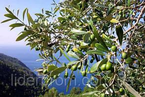 """Мыло медовое """"MIEL de THYM"""" оливковое.Франция, фото 2"""