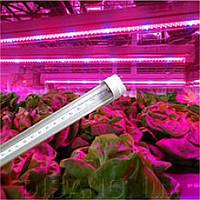Фитолампа T8 1,2м для растений