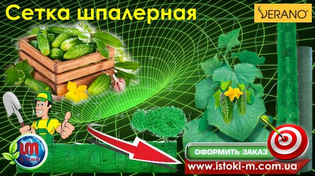 выращивание огурцов_подвязка огурцов_подвязка винограда