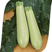 Сцилли F1 - семена кабачка, Seminis 500 семян