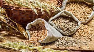 Иранские компании будут выращивать зерновые культуры в Украине