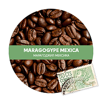 Магароджип Мексика (Mexico)