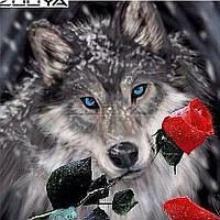 """Алмазная вышивка размер изображения 30х30 - набор """"Волк с алой розой"""""""