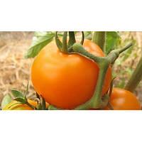 Семена томата KS 10 F1 100 сем. Китано
