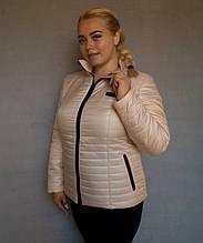 Куртка демисезонная женская № 5/1 (р. 50-56) Бежевый