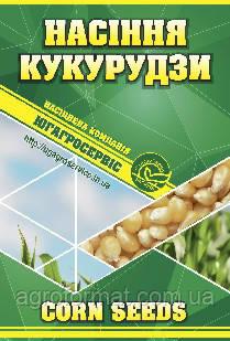 Кукуруза Хортица ДН (ФАО - 240) Экстра