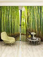 Фотоштора Бамбуковый лес (7935_1_1)