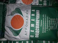 Семена подсолнечника Солтан (Под Гранстар)