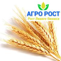 Пшеница озимая Богдана элита/1 репродукция