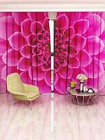 Фотоштора Розовая георгина (14014o_1_1)