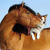 Животные на конюшне