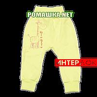 Штанишки на широкой резинке р. 62 демисезонные ткань ИНТЕРЛОК 100% хлопок ТМ Алекс 3297 Желтый Б