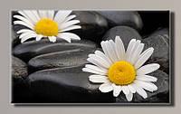 Картина HolstArt Ромашка на камнях 55*32,5см арт.HAS-365