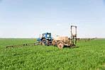 Пшеница: не азотом единым