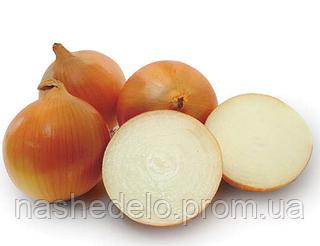 Семена лука Пандеро F1 1 млн. семян Nunhems