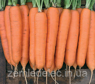 Семена моркови Колтан F1 100000 семян (1,4-1,6) Nunhems