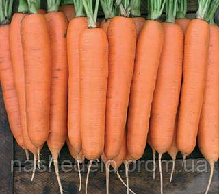 Семена моркови Колтан F1 100000 семян (1,6-1,8) Nunhems