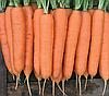 Семена моркови Колтан F1 100000 семян (1,8-2,0) Nunhems