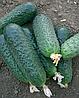 Семена огурца Беттина F1 500 семян Nunhems
