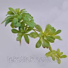 Суккуленты граптопеталум с паростками зеленый зелень искусственная