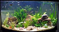 Гиацинт для аквариума, антиорганика