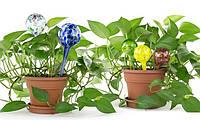 Аква Глоб (Aqua Globes) — шары для полива растений
