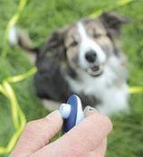 Clicker для дрессировки собак