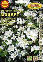Чубушник Лемуана Моцарт