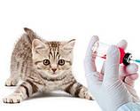 Вакцины и сыворотки для котов