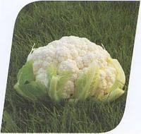 Семена капусты Кердос F1 1000 сем.Seminis.