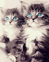 Картины по номерам 40×50 см. Котята с голубыми глазами