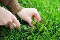 Борьба с сорняками «по умному»
