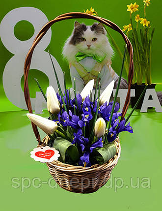 Тюльпаны,нарциссы,крокусы в корзинках, фото 2