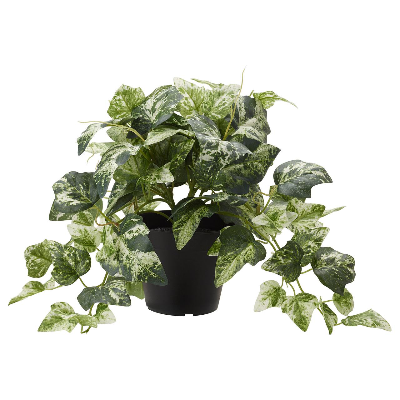 """ИКЕА """"ФЕЙКА"""" Искусственное растение в горшке, Плющ, 27см."""