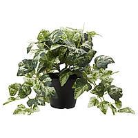 """ИКЕА """"ФЕЙКА"""" Искусственное растение в горшке, Плющ, 27см., фото 1"""