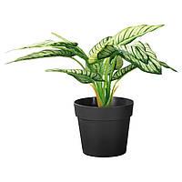 """ИКЕА """"ФЕЙКА"""" Искусственное растение в горшке, диффенбахия, 21 см., фото 1"""