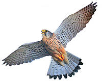 """Визуальный отпугиватель птиц """"Хищник 3"""""""