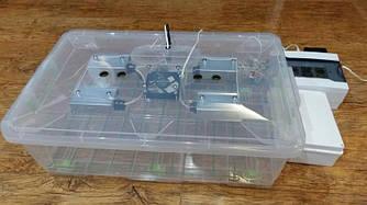 Инкубатор автоматический Курочка Ряба в пластиковом корпусе с регулировкой влажности