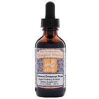 Dragon Herbs, Cultured Cordyceps Drops, 2 fl oz (60 ml)