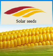 "Семена кукурузы ""Ирис"" Солар Сидс, ФАО 320 Франция"