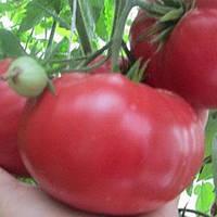 Томат Буги Вуги F1 высокорослый ранний гибрид томата розового цвета без зеленых пятен у плодоножки