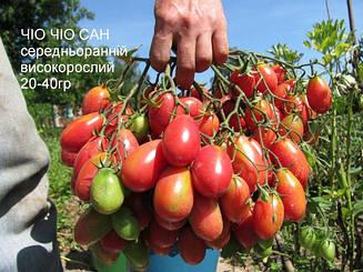 Томат Чио-Чио-Сан высокорослый среднеспелый томат с розовыми сливовидными плодами для консервирования