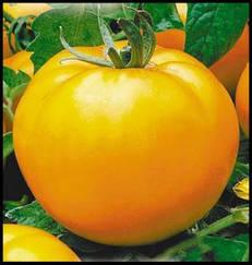 Томат Жираф высокорослый позднеспелый томат с желтыми округлыми плодами для длительного хранения