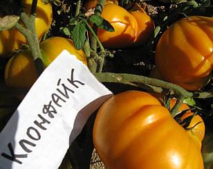 Томат Клондайк высокорослый среднеспелый томат с плодами розово-красного цвета универсального назначения
