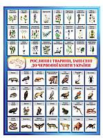 Плакат Красная книга Украины