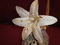 Цветы из ткани (ручная работа)