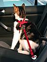 Автомобильная шлея Trixie для котов и маленьких собак красная, фото 2