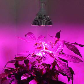 Фитолампа для растений светодиодная флора 16W E27 Ledmax, фото 2